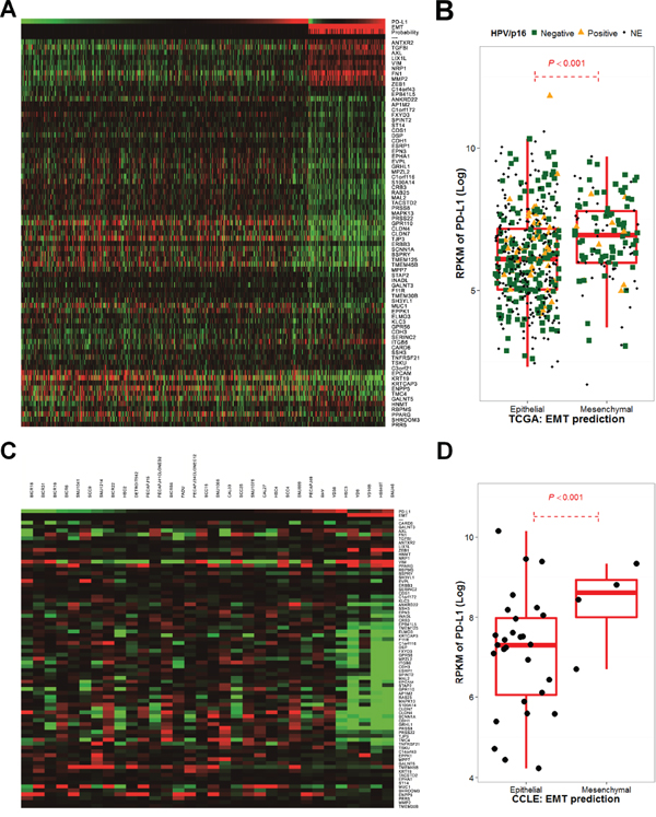 The epithelial-mesenchymal transition gene expression signature correlates with PD-L1 expression in The Cancer Genome Atlas and the Cancer Cell Line Encyclopedia.