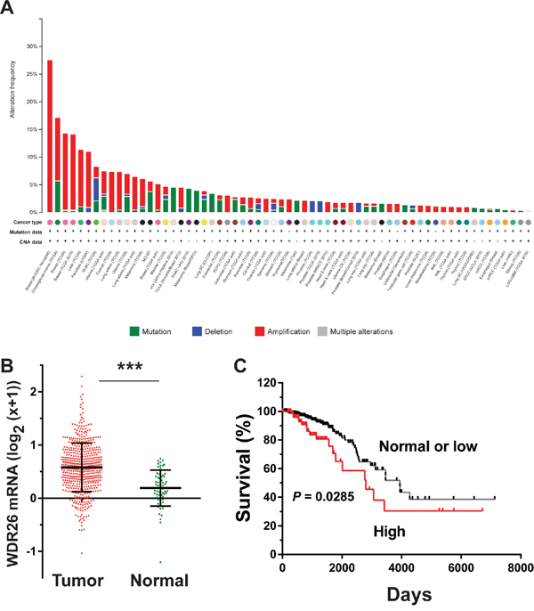 WDR26 expression is upregulated in breast cancer and correlated with poor patient survival.