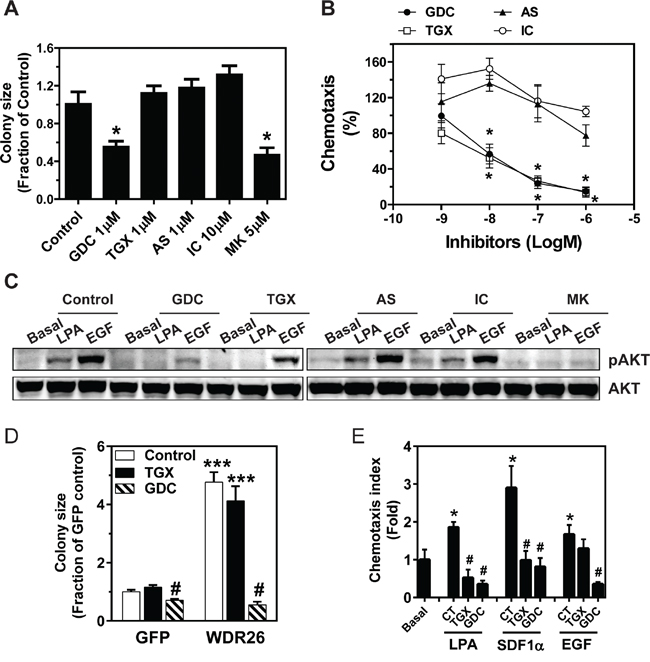 PI3K/AKT activation contributes to WDR26-regulated breast cancer cell growth and migration.