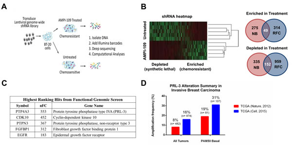 Functional genetic screen with AMPI-109 identifies PRL-3 amplification in invasive basal breast cancers.