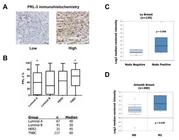 PRL-3 expression is increased in TNBC.