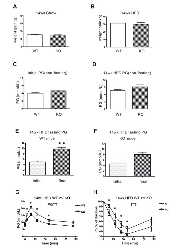 Glucose homeostasis in WT and CD226 KO mice after 14 weeks of high-fat diet (HFD).
