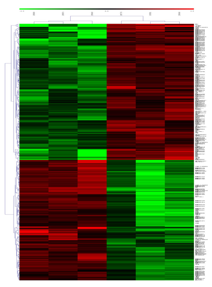 Heat map and hierarchical clustering of lncRNA profile comparison between the AF and normal blood samples.