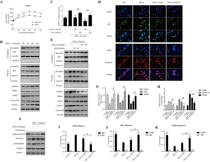 GEN-27 inhibits TNF-α-induced proliferation of human colon cancer cells.