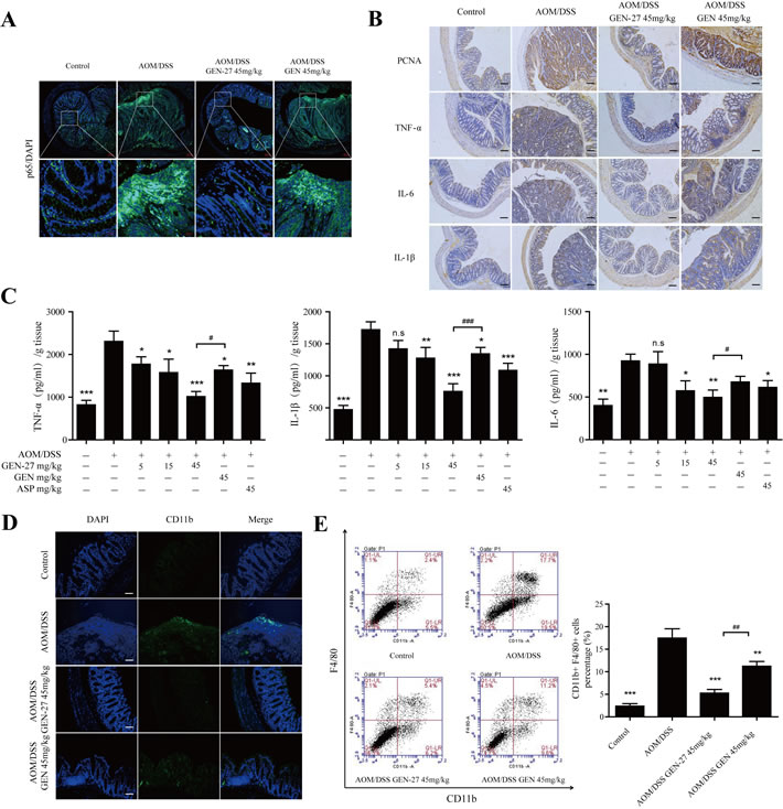 GEN-27 attenuates inflammation in the colitis-associated colorectal cancer model.