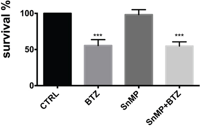 Cell viability following treatment with BTZ (15 nM for 24h) alone or in combination with SnMP (10 μM).