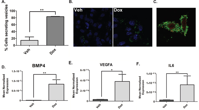 Doxorubicin induces the shedding of TMVs containing NF-κB-responsive genes.