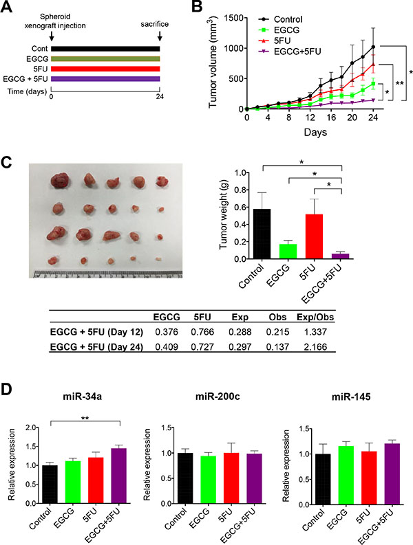 EGCG enhances 5FU against 5FUR derived xenograft tumors.