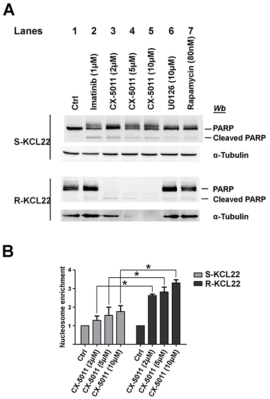 Analysis of apoptosis induction by CK2-inhibition in KCL22 cells.
