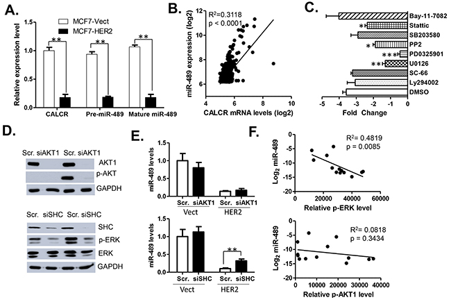 Expression of miR-489 is downregulated at transcriptional level by HER2 signaling.