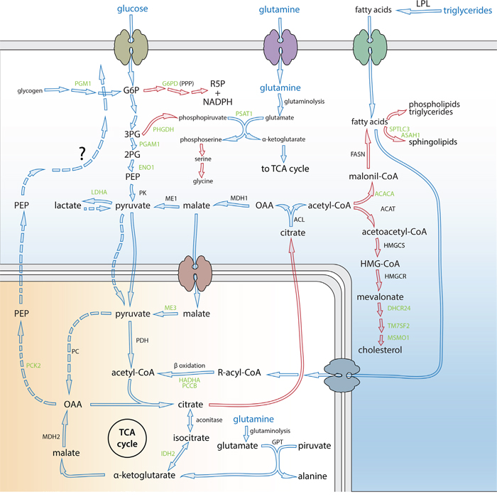 PE5 down-regulated enzymes belonging to deregulated metabolic pathways in cancer.
