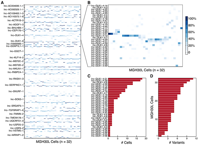 Variation in splicing patterns of lncRNAs in single cells.
