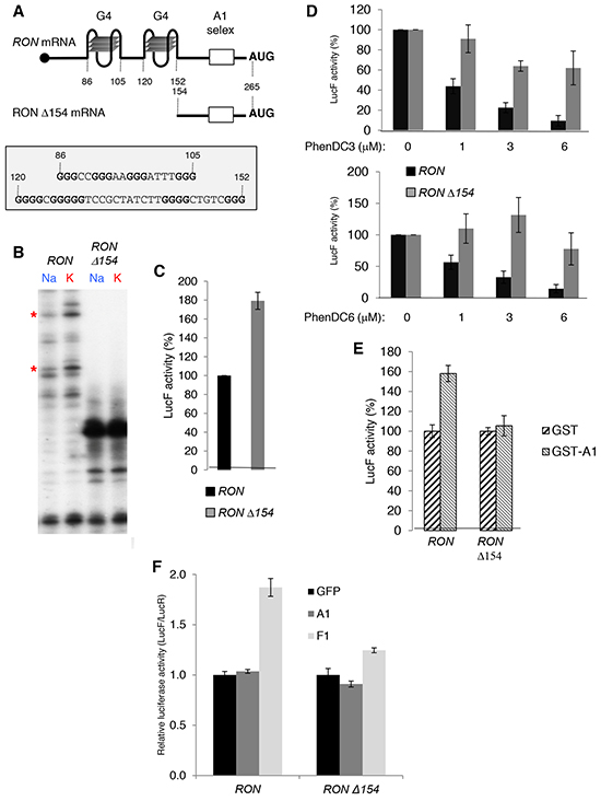 G4 RNA structures in the 5′UTR of the RON mRNA are required for hnRNP A1-mediated translation activation.
