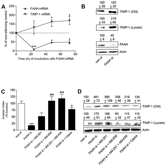 Impact of FAAH knockdown on tumor cell invasion and TIMP-1 expression - role of cannabinoid-activated receptors.
