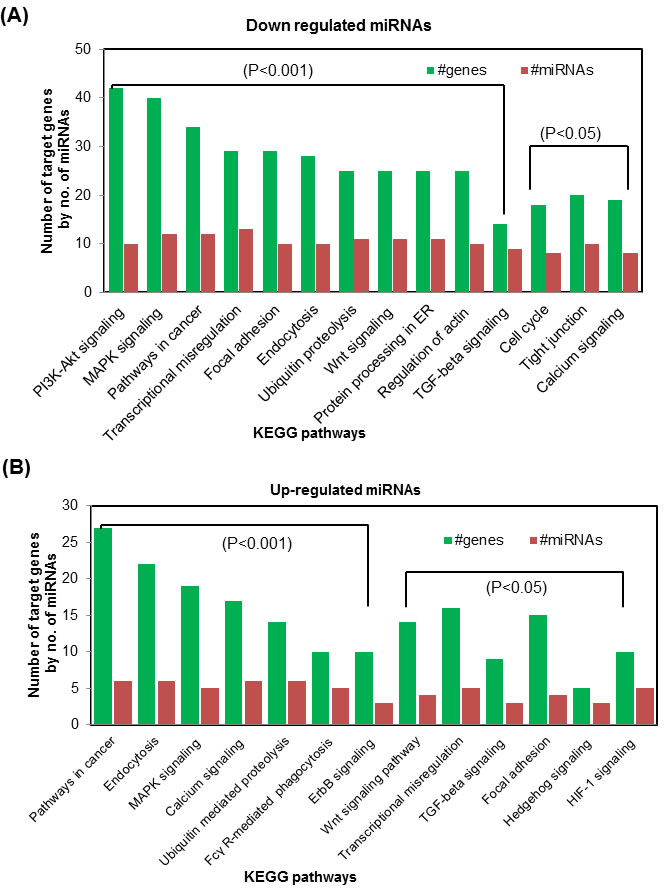 Bioinformatics analysis of differentially expressed miRNAs following acute UVR exposure in WT and TNFα KO mice.