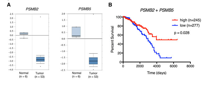 Low proteasome subunit expression is associated with breast tissue from patients with breast cancer and decreased patient survival.