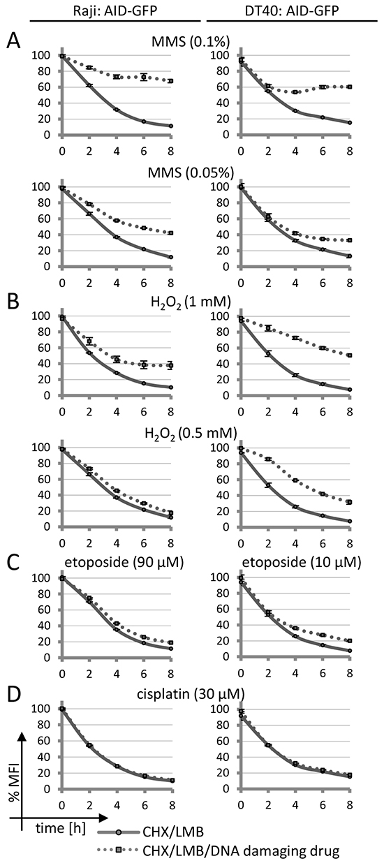 Effects of DNA damage on AID-GFP protein degradation.