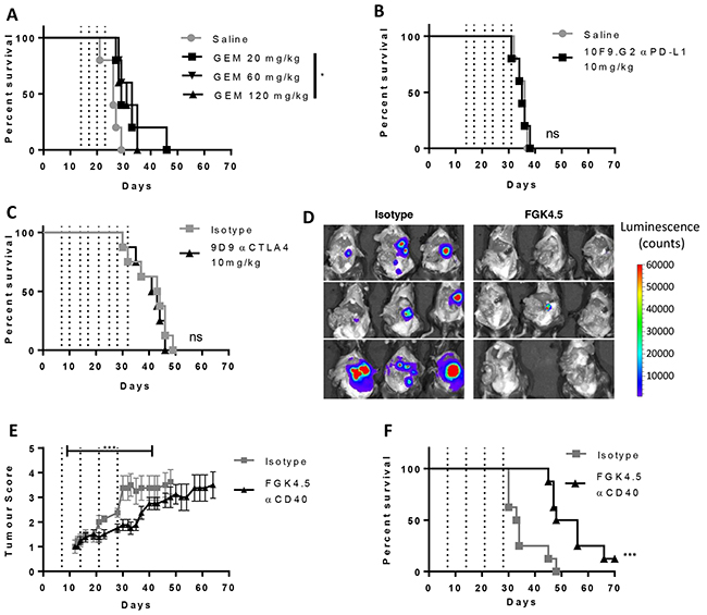 Orthotopic Pan02 model of pancreatic cancer is insensitive to immune checkpoint blockade therapy