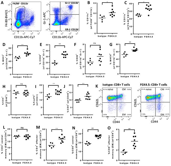 αCD40 drives myeloid cell maturation and memory T cell expansion in spleen