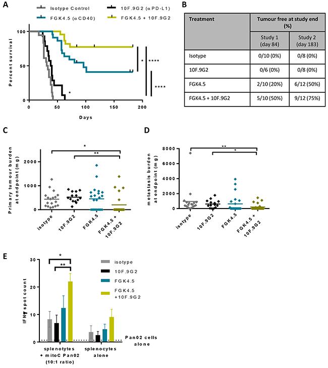 αCD40 + αPD-L1 combination improves anti-tumour immunity