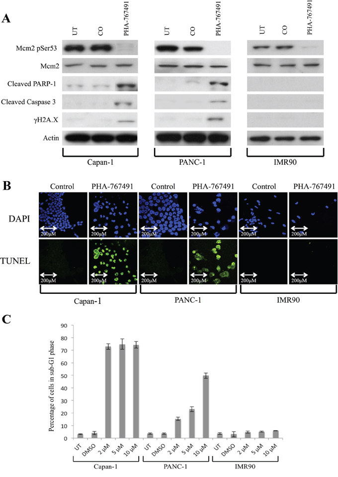 Effect of treatment with PHA-767491 on Capan-1, PANC-1 and IMR90 cell lines.