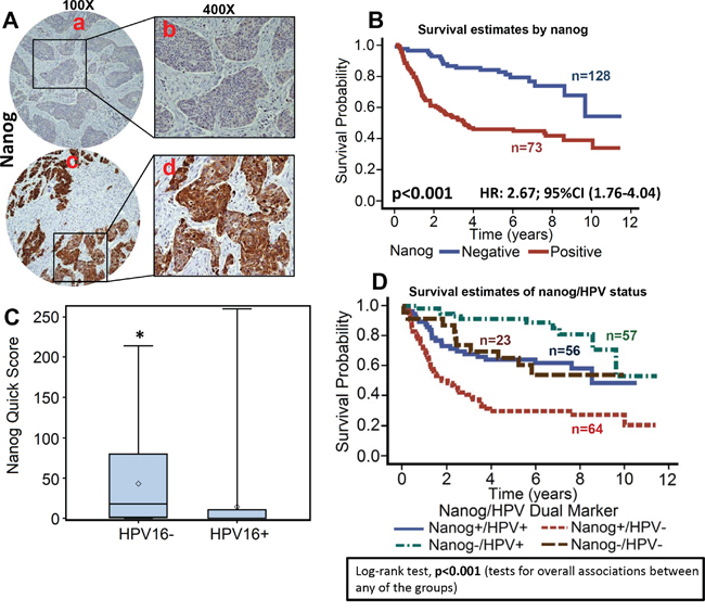 High nanog expression is associated with poor overall survival.