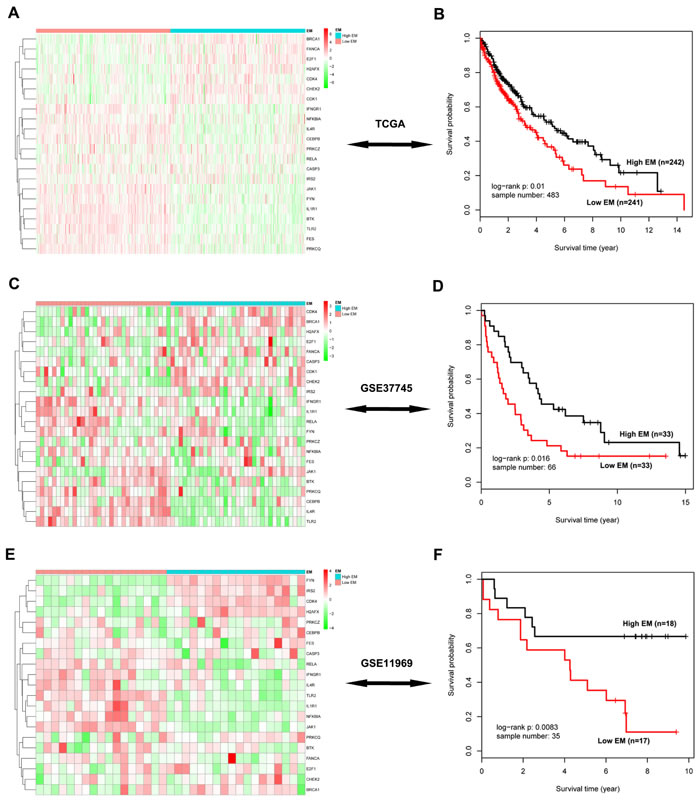 Survival analysis of the significant 22-gene module in three independent testing cohorts.