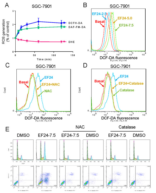 ROS generation is the key regulator of EF24-induced apoptosis.
