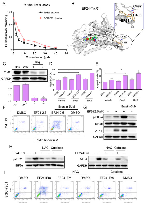 EF24 directly binds and inactivates TrxR1 in human gastric cancer cells.
