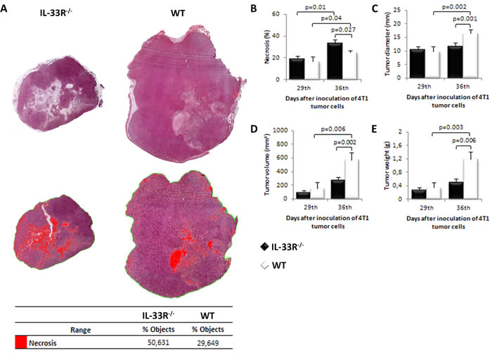 Genetic deletion of IL-33R favors tumor necrosis and attenuates tumor growth in 4T1 breast carcinoma in mice.