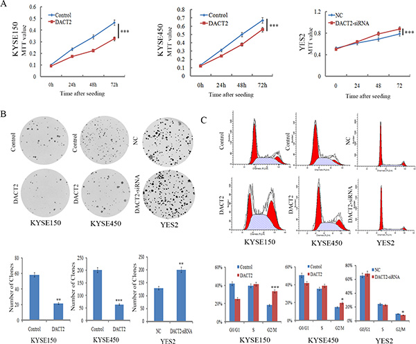 DACT2 inhibits cell proliferation and induces G2/M phase arrest in esophageal cancer cells.