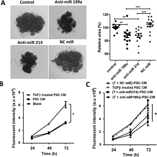 Effect of anti-miR-199a and -214 on the heterospheroid formation and hPSC-induced tumor cell proliferation.