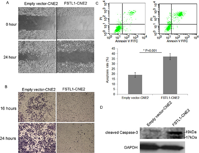 FSTL1 impedes cell migration, invasion and induces apoptosis of CNE2 cells.