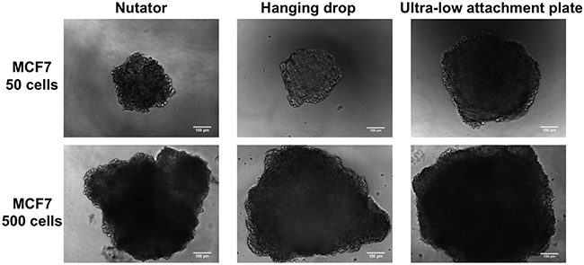 Phase contrast micrographs of MCF7 spheroids at Day 7 generated on hanging drop array plates, ultra-low attachment plates and ultra-low attachment plates with a 48 hour nutation period.