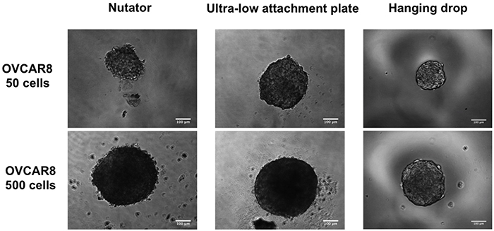 Phase contrast micrographs of OVCAR8 spheroids initiated with 50- or 500 cells/drop on the three platforms.