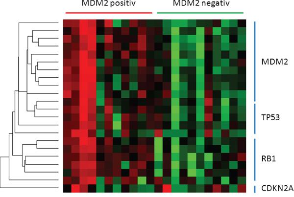 The heatmap presents miRNAs directing TP53 pathway members.