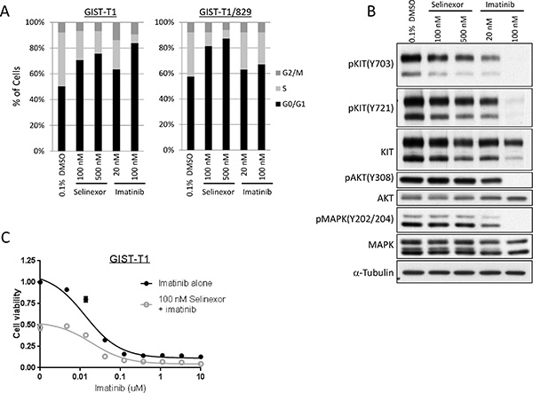 Selinexor induced cell cycle arrest in GIST independent of KIT signaling pathway.