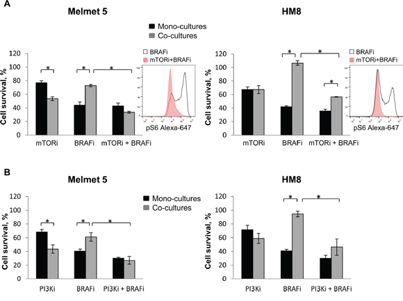 mTOR or PI3K inhibitor reduces the protective influence of fibroblasts in the co-cultures.