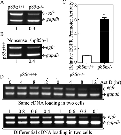 p85α mediated EGFR mRNA stabilization.