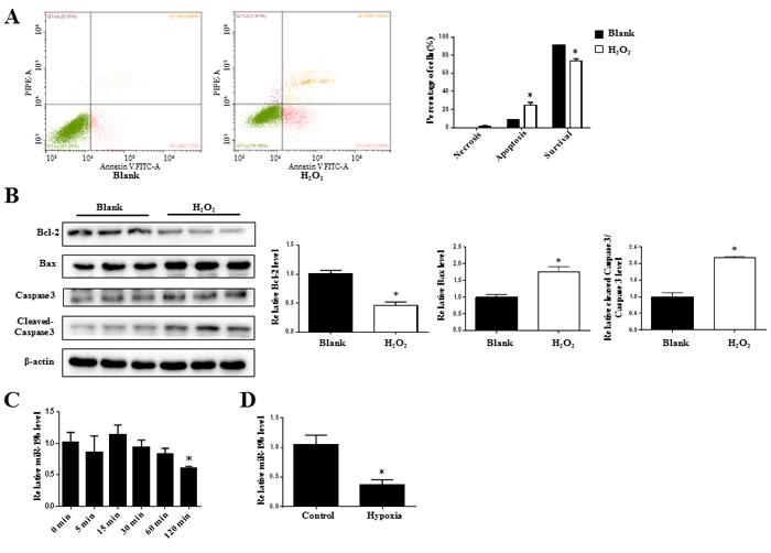 miR-19b is decreased in H