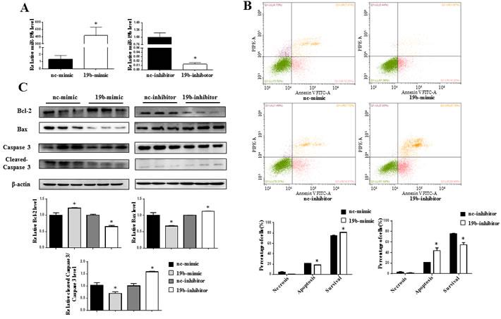miR-19b reduces H