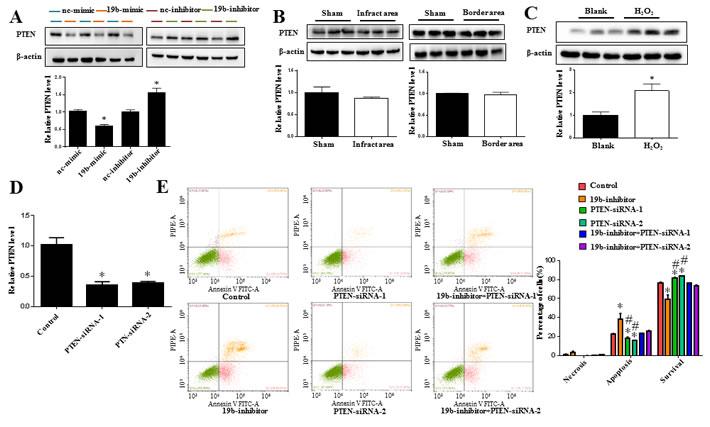 PTEN is a target gene of miR-19b controlling H