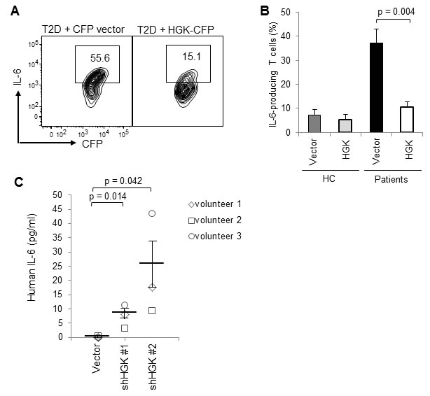 Ectopic HGK expression inhibits IL-6 production in human peripheral blood T cells.