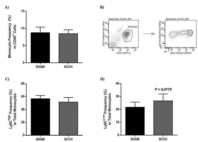 SCCH induces slightly increases patrolling monocyte subset frequency in blood circulation.