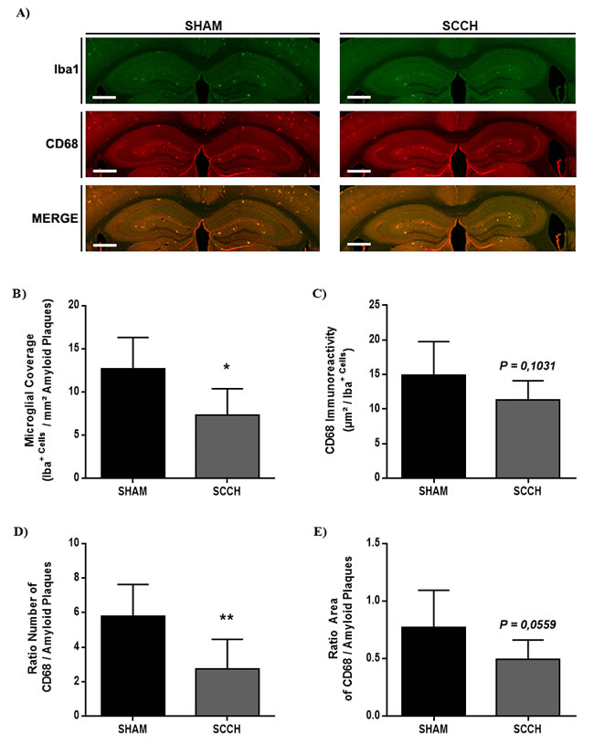 SCCH alters microglial cell function in APP