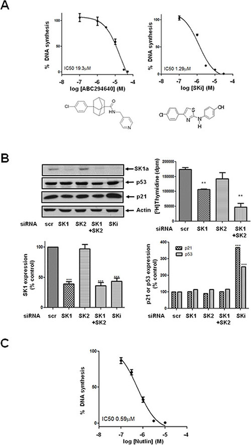 Effect of ABC294640, SKi, nutlin or siRNA knock down of SK isoforms on [3H]thymidine incorporation in androgen-independent LNCaP-AI cells.