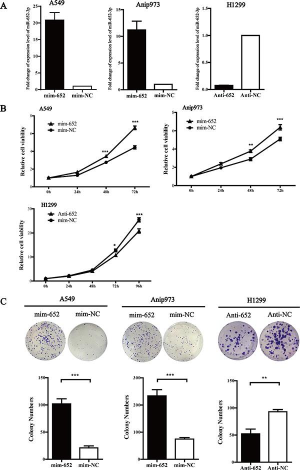 MiR-652-3p promotes cell proliferation.