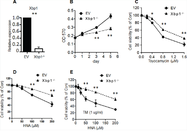 Knock-out Xbp1 induced myeloid cell resistance to IRE1 inhibitors.