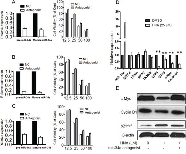 Blockade of miR-34a decreased sensitivity of IRE1 inhibitor in vitro .