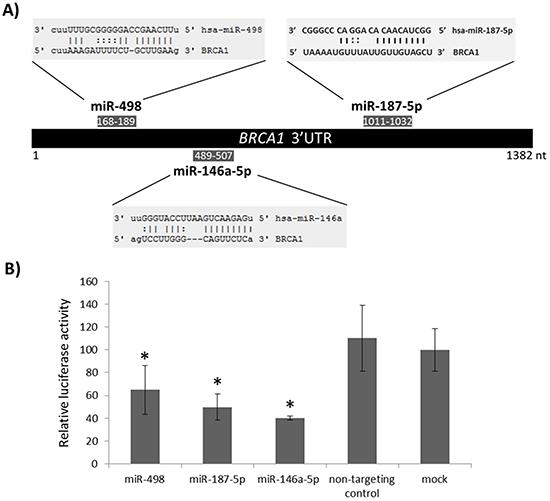 Targeting of BRCA1 3' UTR by miR-498 and miR-187-5p.